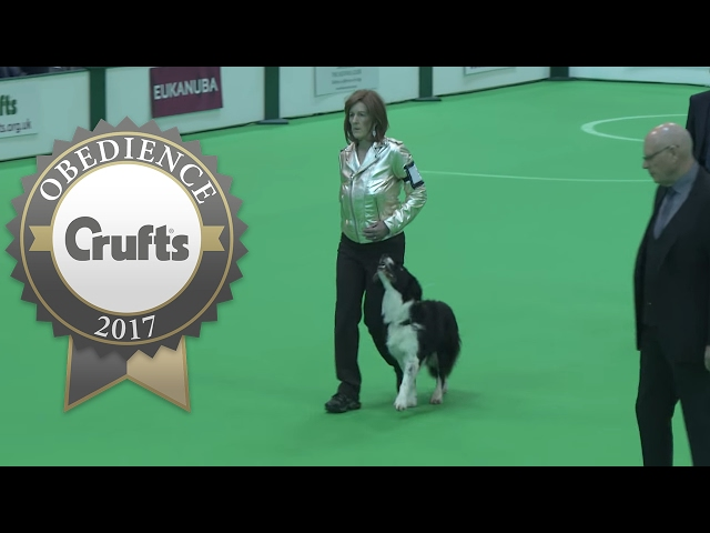 Obedience Championship - Dogs - Part 3 | Crufts 2017