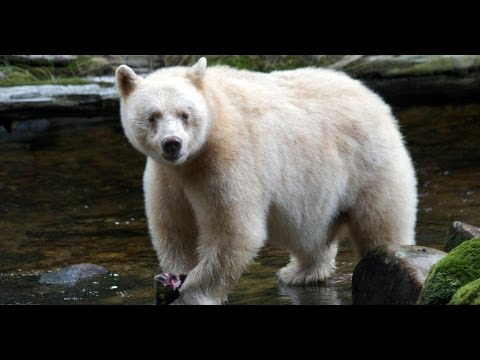 Touching Spirit Bear - YouTube