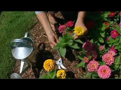 Cut Flower Garden YouTube