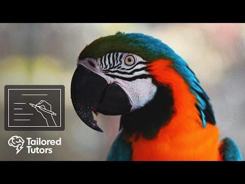 Species & Taxonomy (Topic 4)
