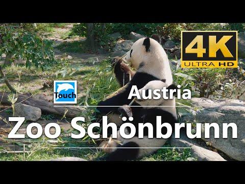Zoo Schönbrunn, Vienna, Austria - 4K