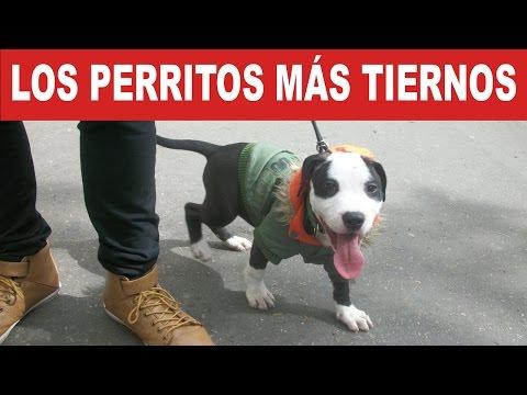 Los Perritos Más Tiernos y Adorables | Tu Mascota TV