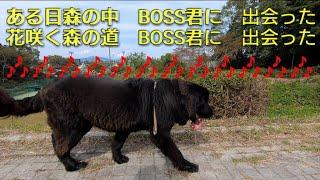 おはようございます☀ BOSS君3日目の最後のお散歩(^^) イイネ  ✨コメント...
