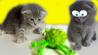 КОТЯТА VS ПАУК. Смешной котенок Илья
