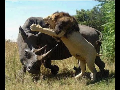 Documental de Animales Salvajes (La Alimentacion en Africa)