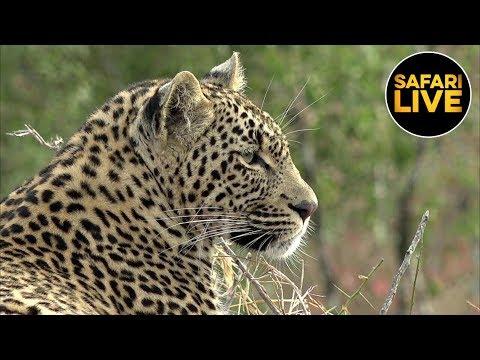 safariLIVE - Sunrise Safari - June 25, 2019 Part 1