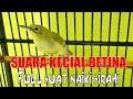 Kecial Betina Rangsang Jantan  Mp3 - Mp4 Download
