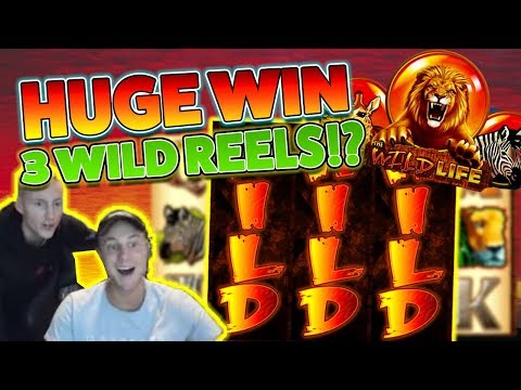 HUGE WIN OR EPIC FAIL?! Wild Life Casino game from IGT from Casinodaddy Live Stream