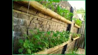 Lahan sempit bukan alasan tidak bisa menanam sayur.