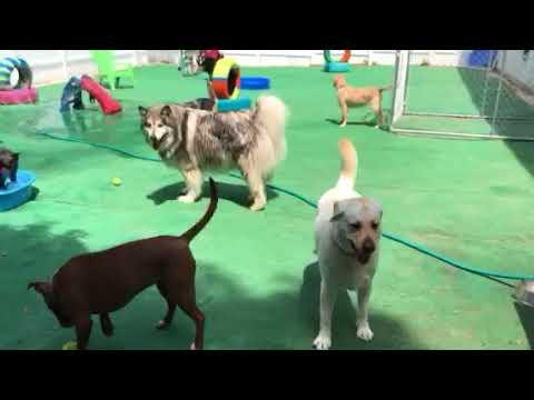 Home - Kotas Place Dog Daycare