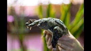 Популярные виды черепах