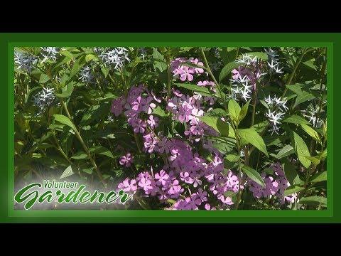 Botanical Garden at Austin Peay State University | Volunteer ...