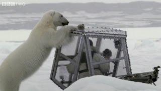 Close encounter with a polar bear - The Polar Bear Family & Me - Episode 1 - BBC Two