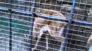 fazal ostrich deer farm gujrat pakistan