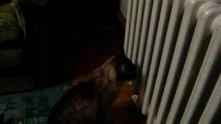 «Кот и его страстная любовь к батареи»