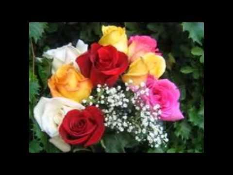 Fotos de rosas de colores youtube - Fotos de rosas de colores ...