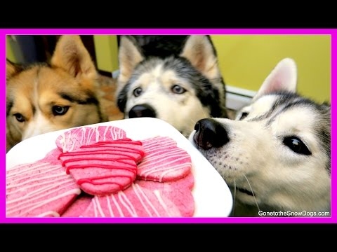 VALENTINE'S DOG TREATS DIY | Valentine's Day Dog Cookies | Snow Dogs Snacks 44