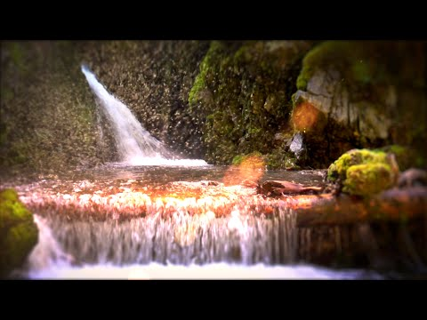 Study Hack | Waterfall White Noise Clears Mind & Blocks Out Distractions | 10 Hours Nature Video