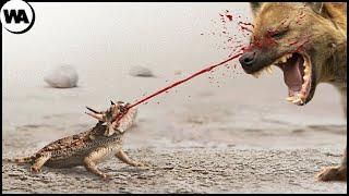 Смертельные Способы Защиты Животных