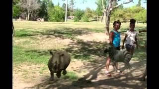 Zoo Animals Thumbnail