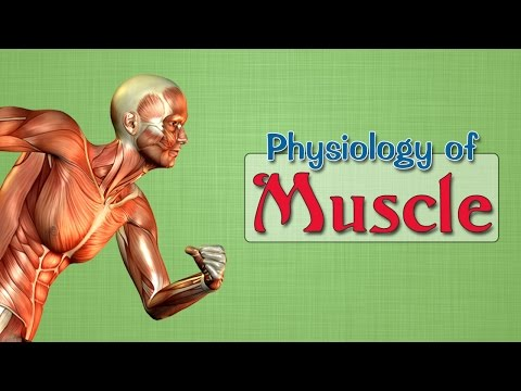 Easy Physiology | Muscle | 2-Isometric & Isotonic contractions