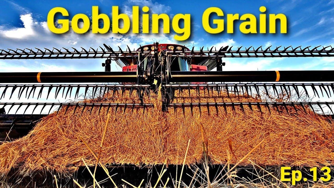 Gobbling Grain