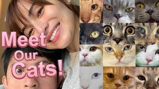 Meet Our Cats!