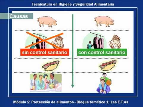 Tec higiene y seguridad alimentaria epidemiolog a de for Higiene y manipulacion de alimentos pdf