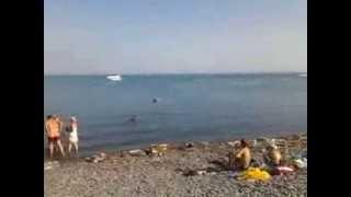 пляжи России(, 2013-10-26T06:37:32.000Z)