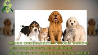 Сеть ветеринарных клиник в центре Израиля 052-2506596