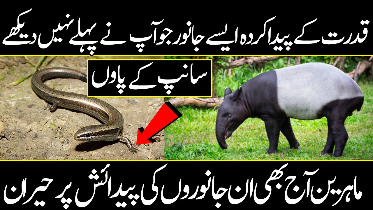 Strange animals who have unresolved stores | Urdu Cover