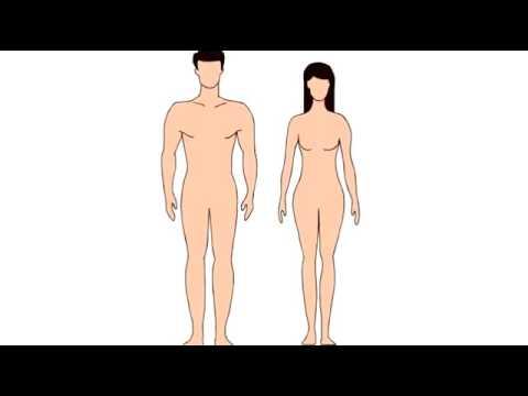 1 Spirit Science   Male & Female Energy