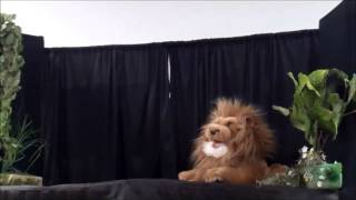 El Ratón y el León elizabeth Shannon Andrea Maura Thumbnail