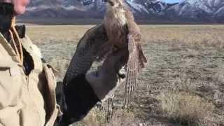 Gambar cover Jonah Prairie Falcon