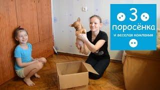 Три поросенка делают из картонной коробки будку для крупного собакена Джека