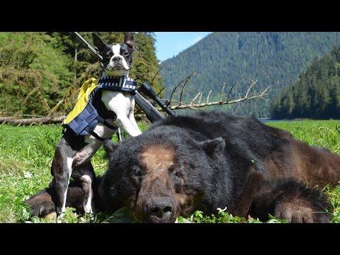Black Bear Hunting- Bears & Bonds-  Alaskan Adventure Web Promo