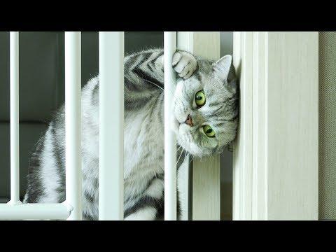 고양이가 7cm 틈을 빠져나갈수 있을까? 고양이 프리즌브레이크
