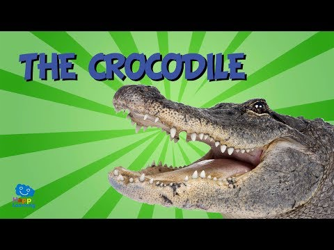 The Crocodile | Educational Video For Kids.