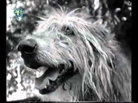 My Hond Fanie KWELAflv