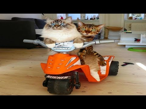 Funny Cats  Compilation #22
