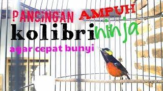 Gambar cover Pancingan kolibri ninja agar cepat bunyi AMPUH