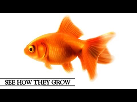 See How They Grow | Goldfish