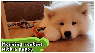 Morning Routine With A Puppy!| Samoyed Puppy