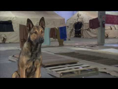 """Max: Dog """"Max"""" Behind the Scenes Movie Interview"""