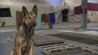 "Max: Dog ""Max"" Behind the Scenes Movie Interview"
