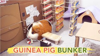 Popular Guinea Pig Town Related to Games