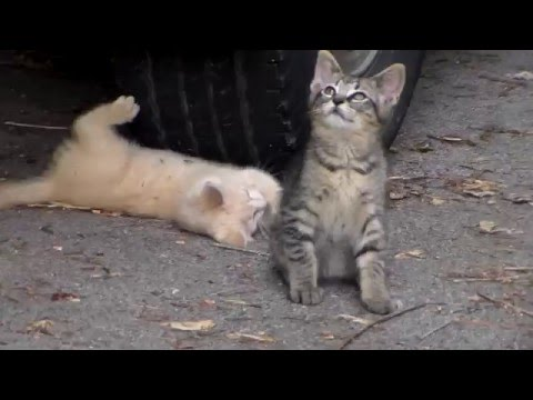 My Kittens Playing