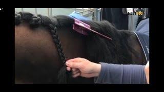 #27 Slik kan du flette hesten med strikk