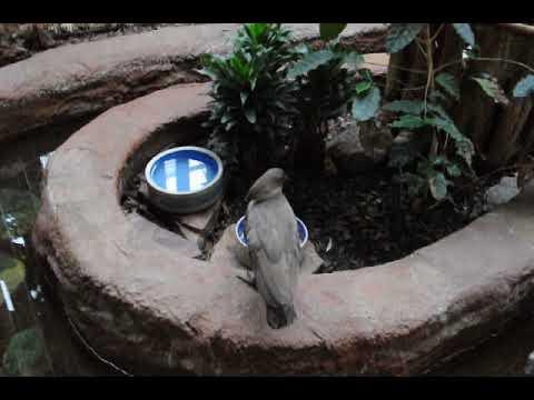 A hammerkop