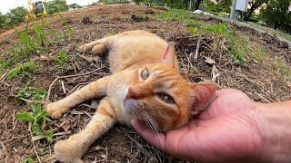 お気に入りだった空地が工事されて行くのを悲しんで訴える野良猫(違うかな?)